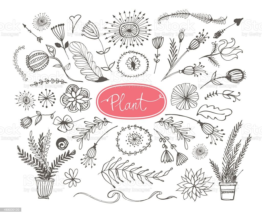 Set of hand drawn plants. Leafs and flowers. vector art illustration