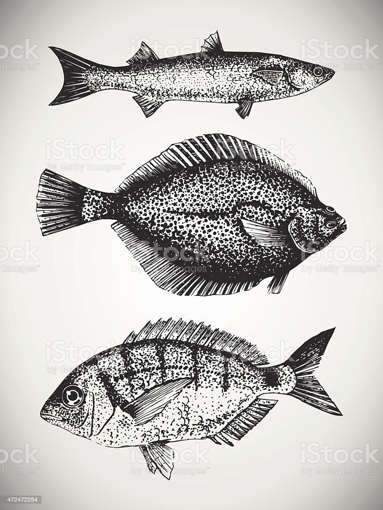 Set of hand drawn sea fishes vector art illustration