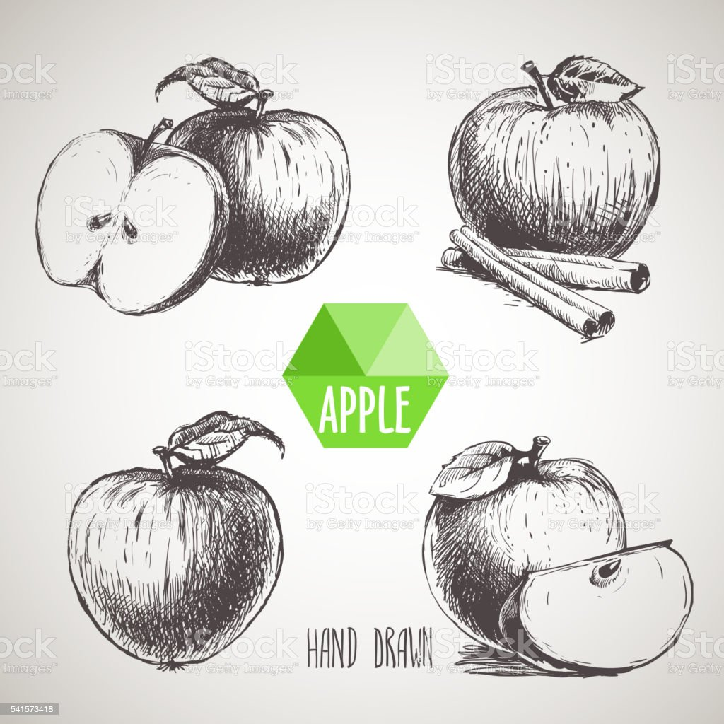 Set of hand drawn sketch apples. vector art illustration