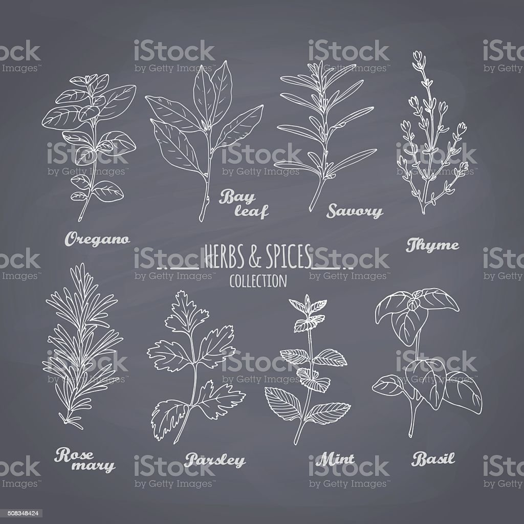 Set of hand drawn spicy herbs on chalkboard background vector art illustration