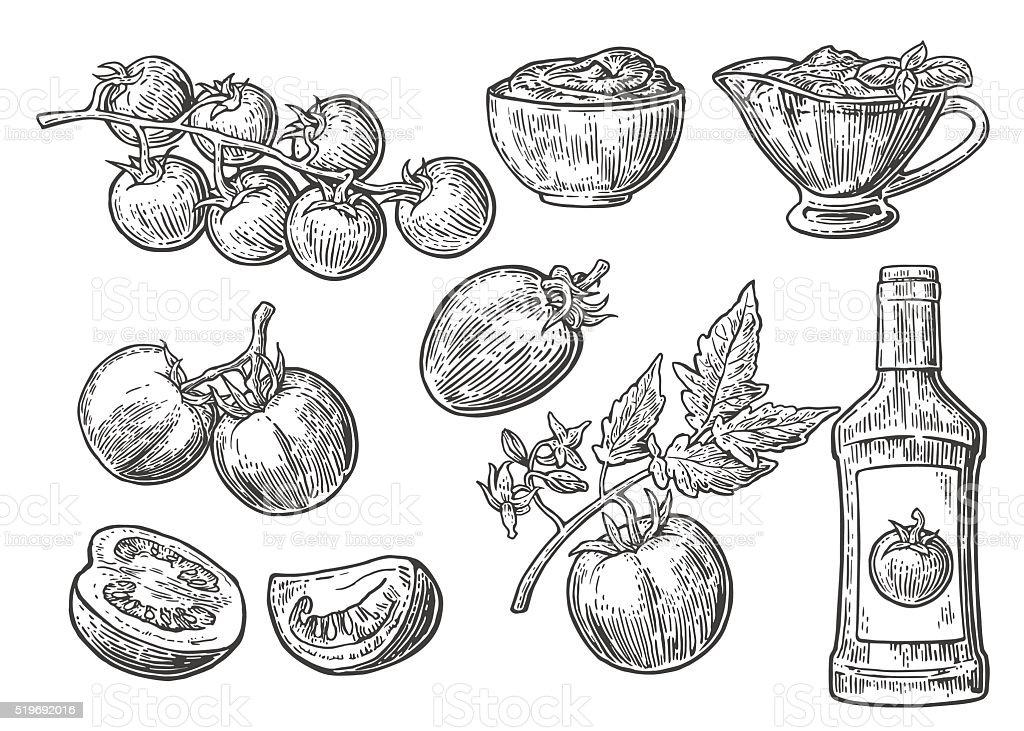 Set of hand drawn tomatoes. Tomato, half and slice, ketchup vector art illustration