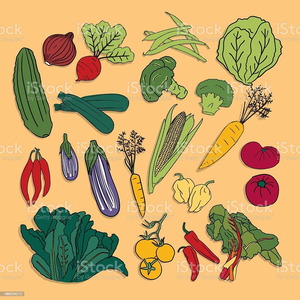 SEt of hand drawn vector vegetables vector art illustration