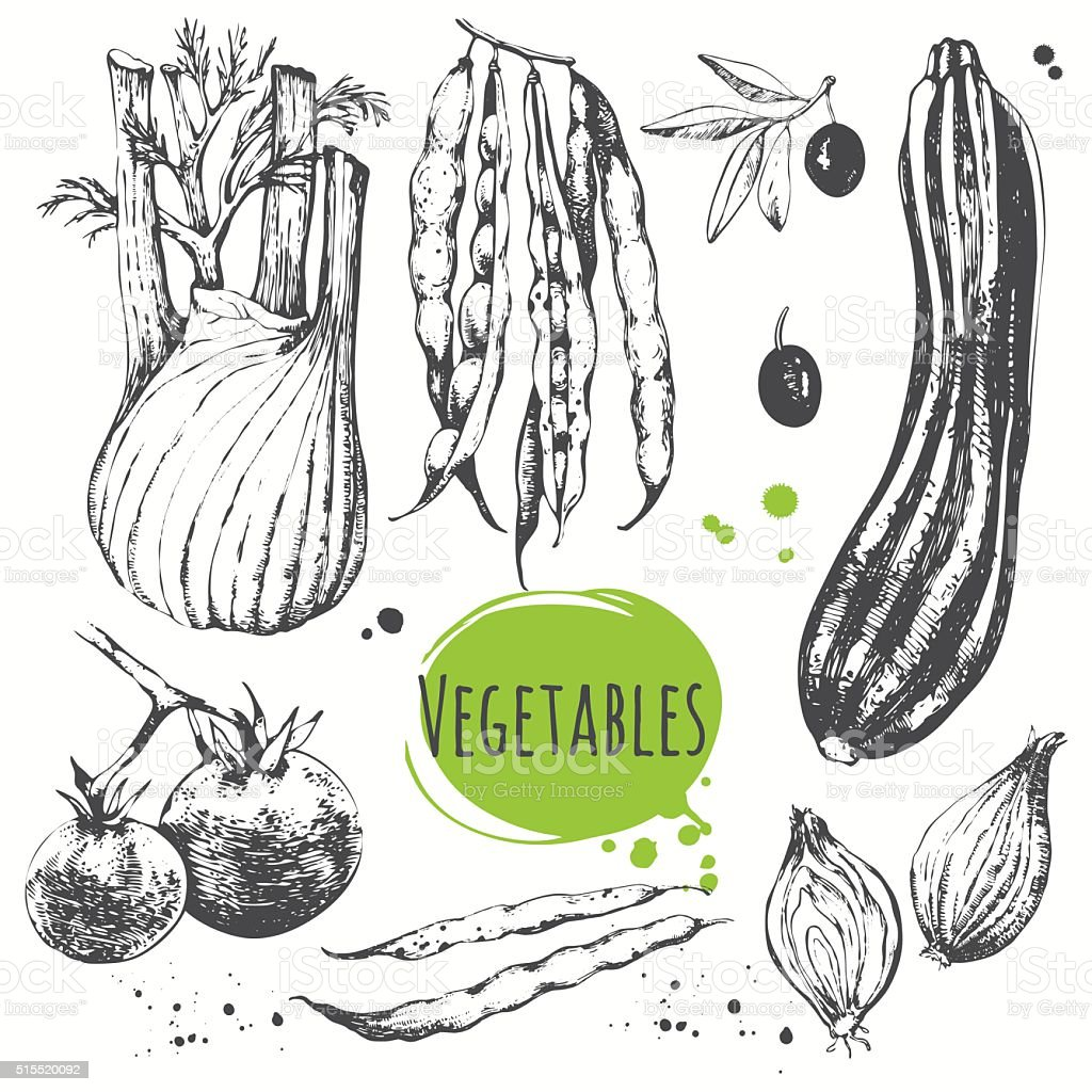 Set of hand drawn zucchini, cherry tomatoes, fennel, green beans. vector art illustration