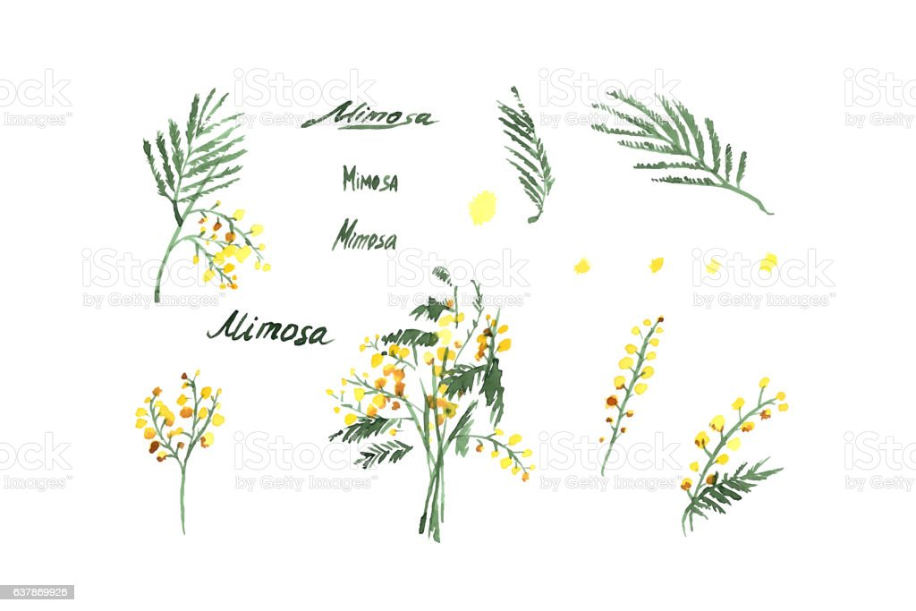 Set of Hand-Drawn Mimosa vector art illustration