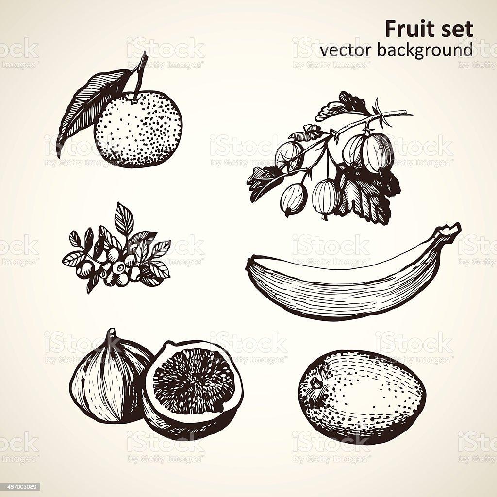 set of hand-made graphics fruit vector art illustration