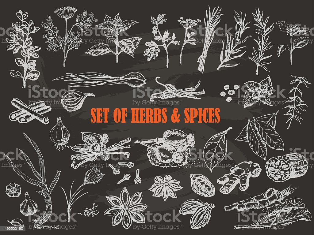 Set of Herbs and spices in sketch style on black vector art illustration