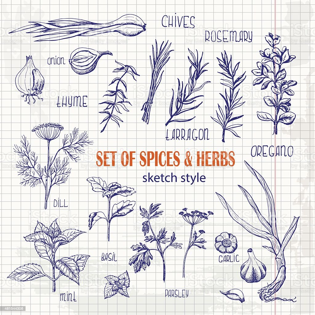 Set of Herbs and spices in sketch style on paper vector art illustration