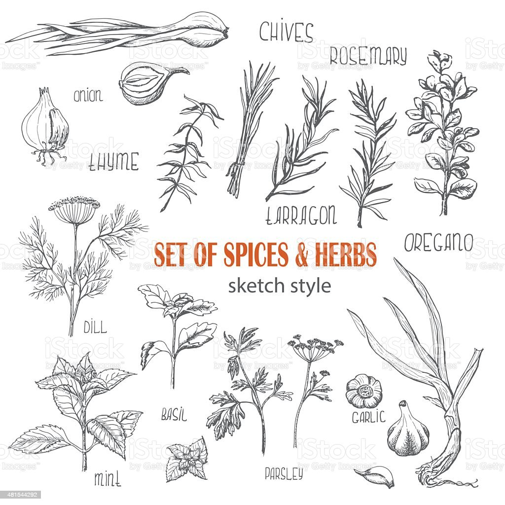 Set of Herbs and spices in sketch style vector art illustration