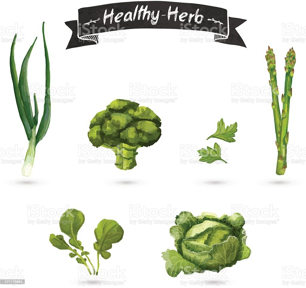 Set of herbs for food in a watercolor style. vector art illustration