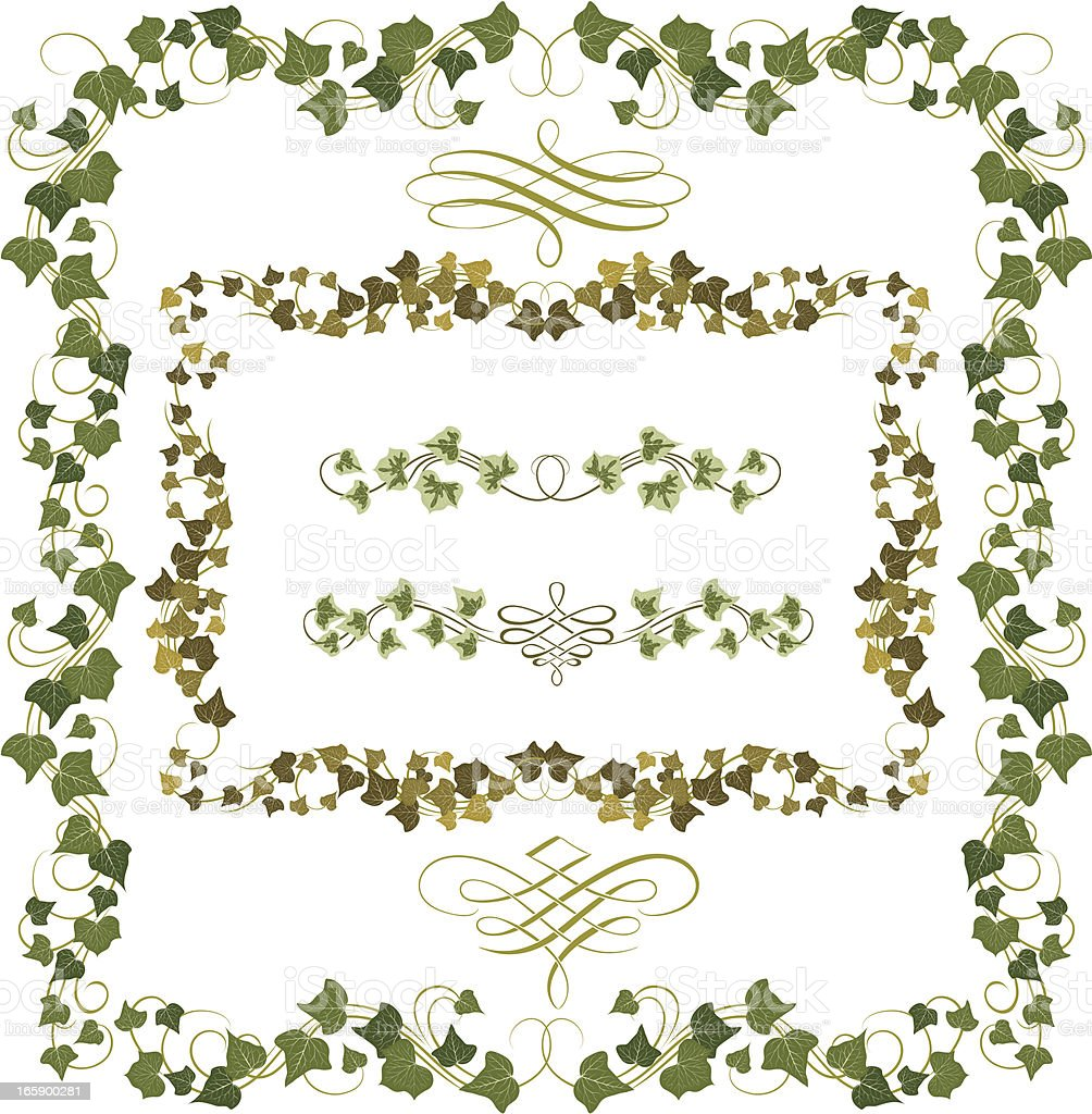 Set of illustrated ivy frames or borders vector art illustration