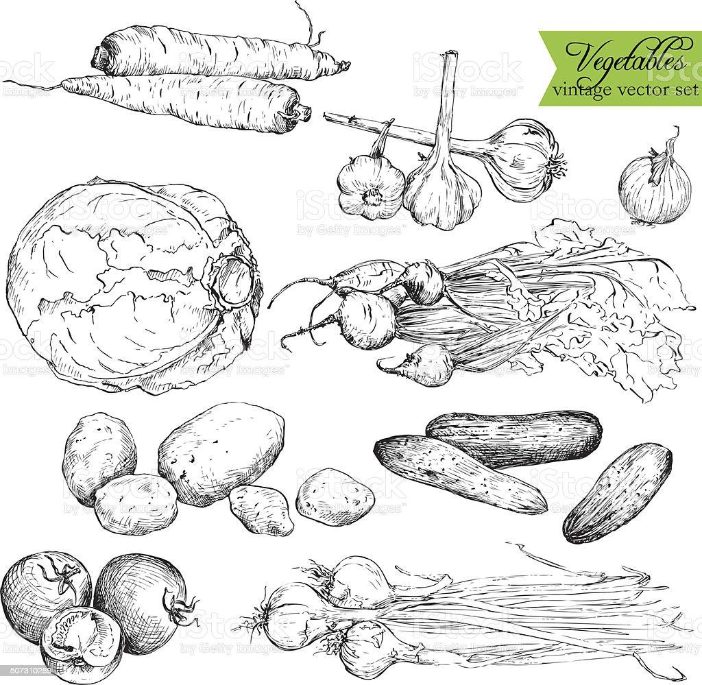 Set of  ink drawing vegetables vector art illustration
