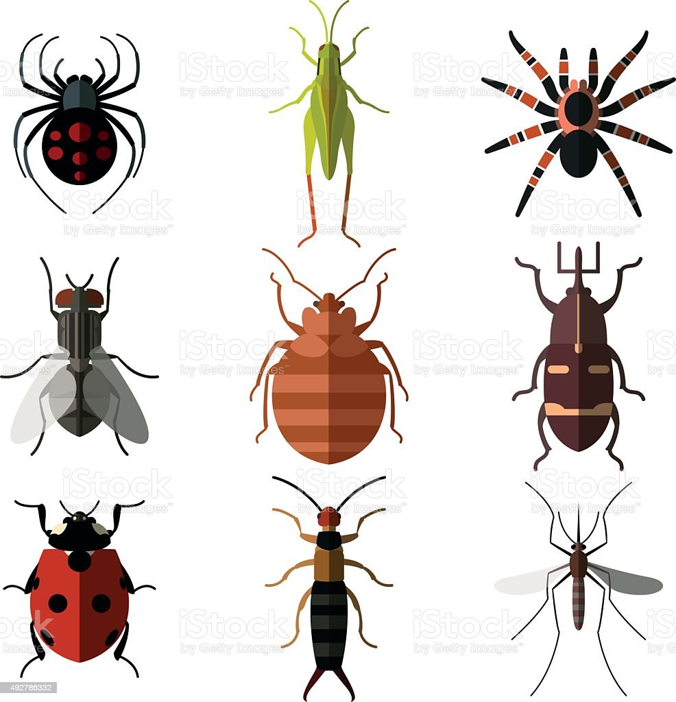 Set of insect flat icons3 vector art illustration