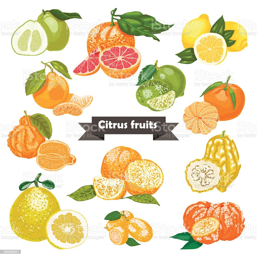 Set of isolated citrus fruits vector art illustration