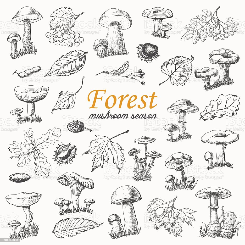 Set of isolated forest plants and mushrooms in sketch style vector art illustration