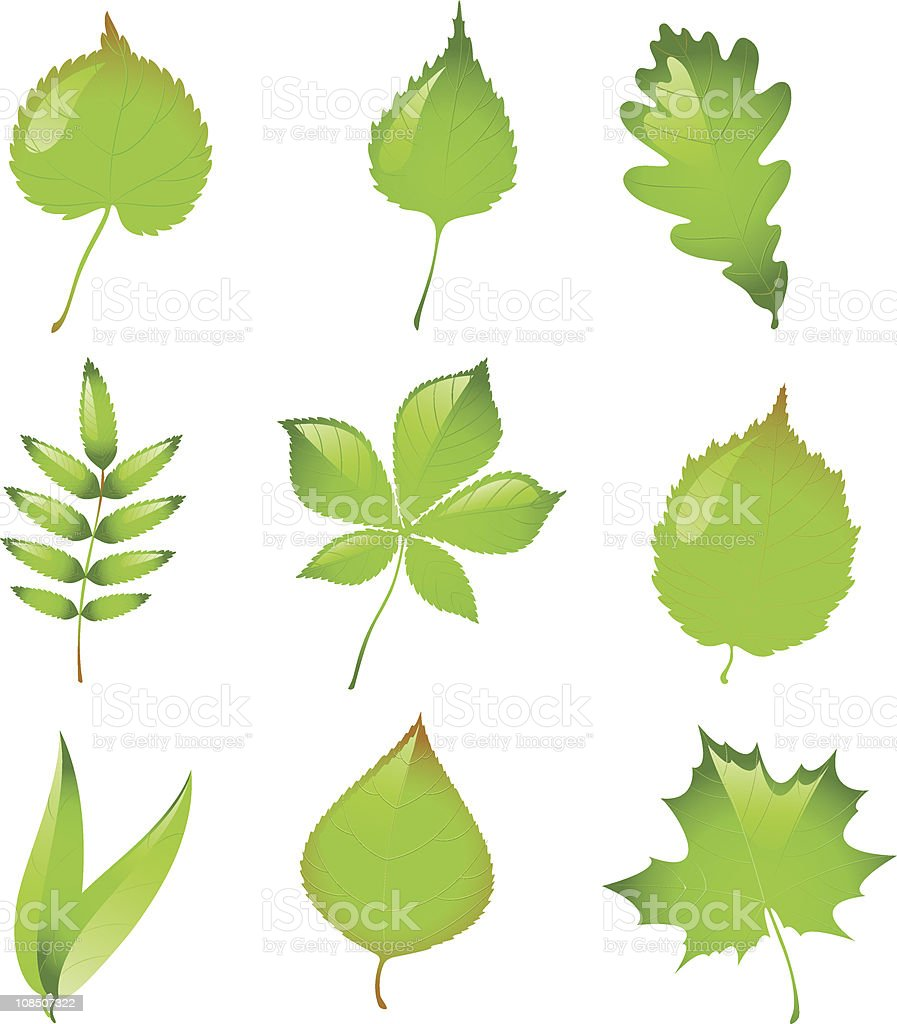 Set of isolated vector leaves. vector art illustration