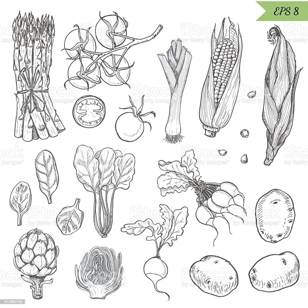 Set of isolated vegetables in a sketch style. vector art illustration