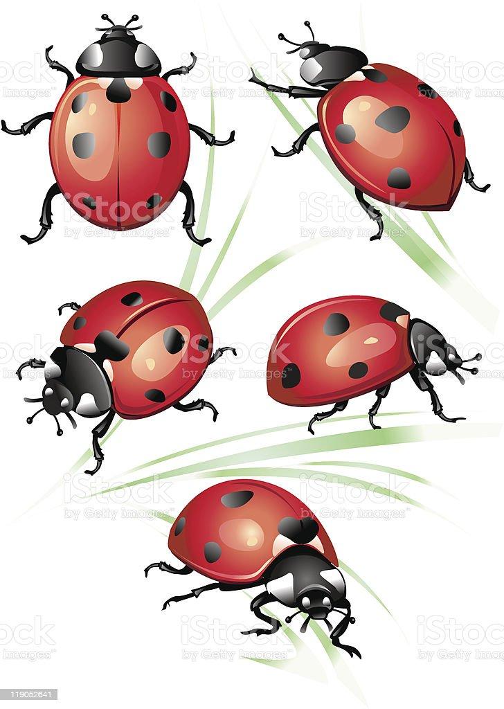 Set of ladybirds vector art illustration