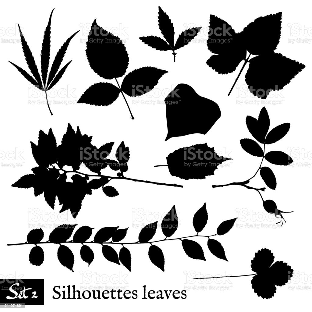 Set of Leaf Silhouettes. Isolated on white. vector art illustration