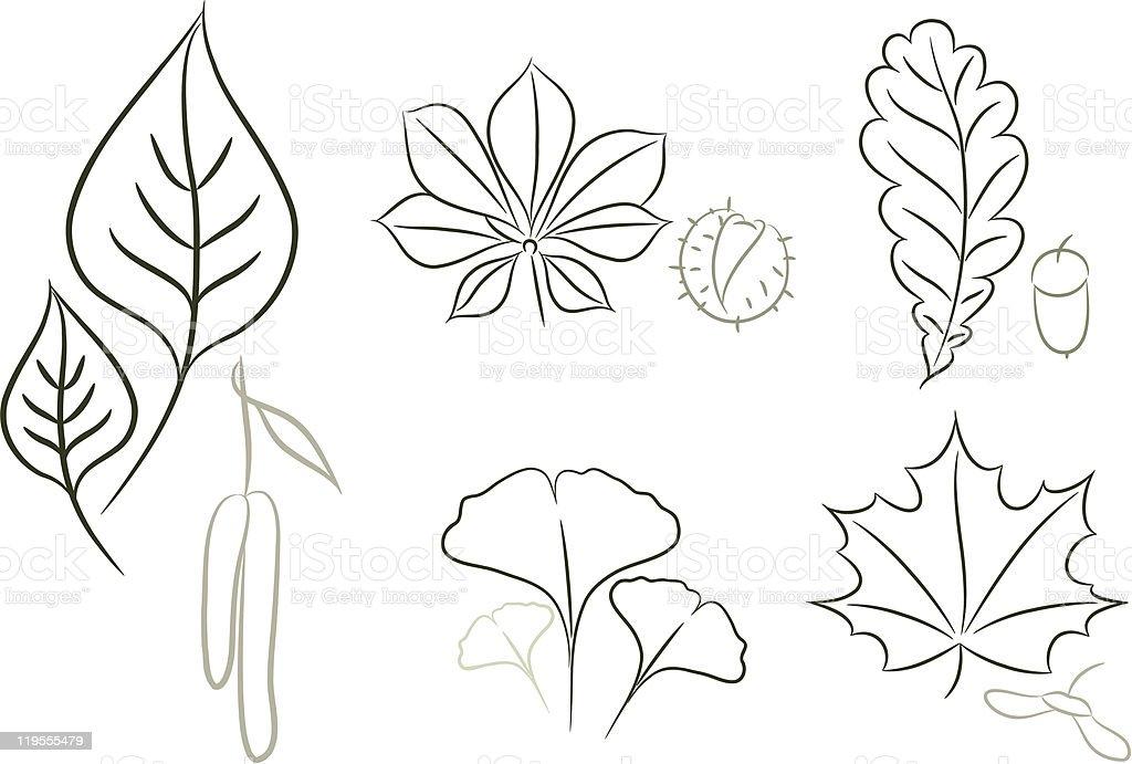 Set of leaf sketch royalty-free stock vector art