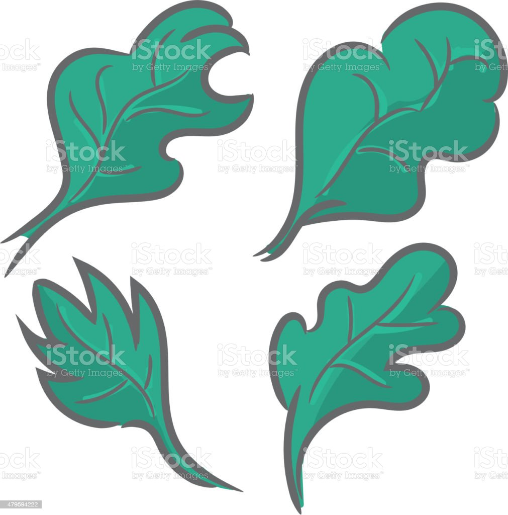 Set of leaves stylized nature icon or badge label vector art illustration