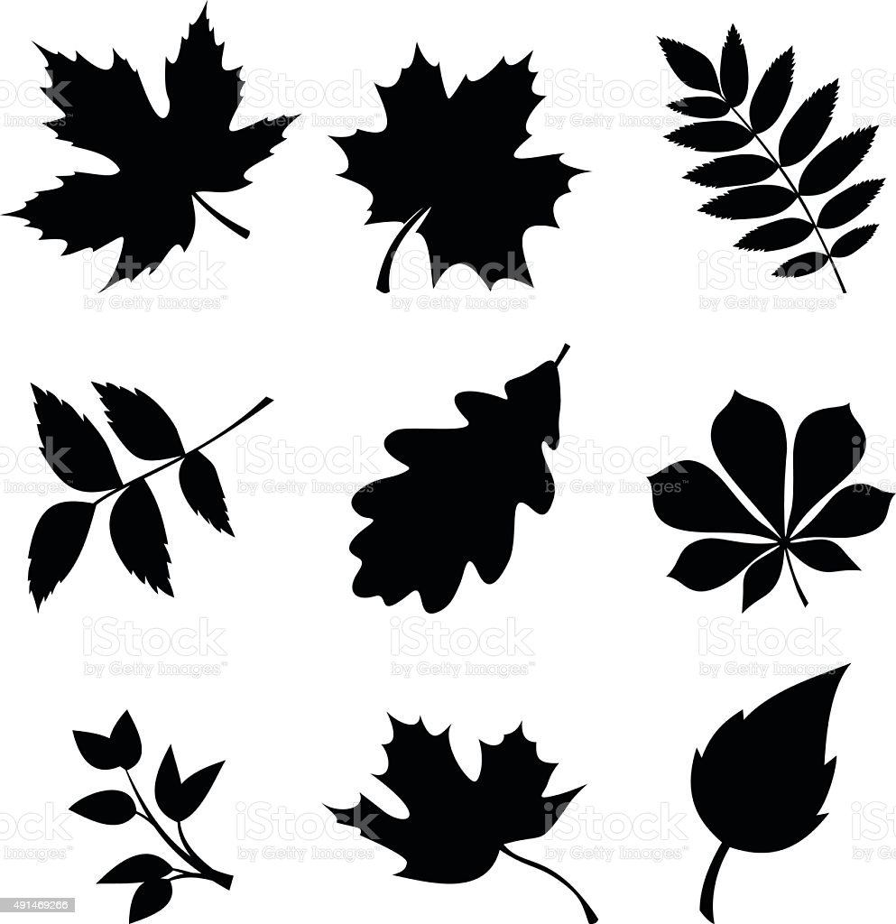 Set of leaves. Vector black silhouettes. vector art illustration