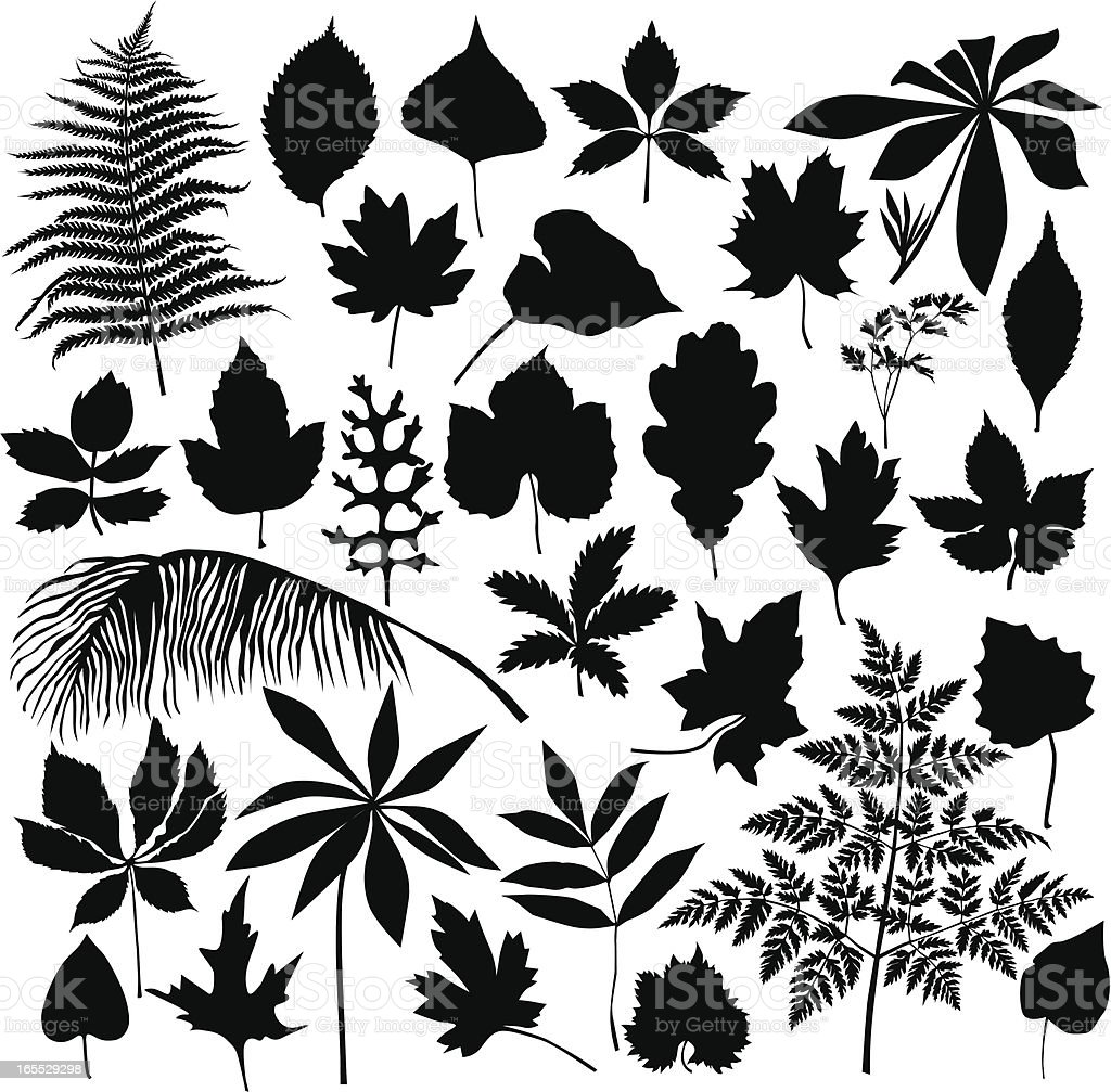 Set of leaves royalty-free stock vector art
