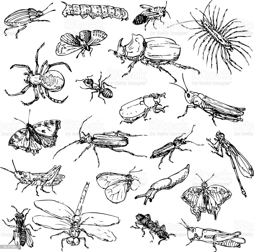 set of line drawing insects vector art illustration
