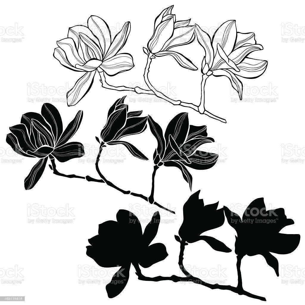 Set of magnolia isolated on white background. vector art illustration