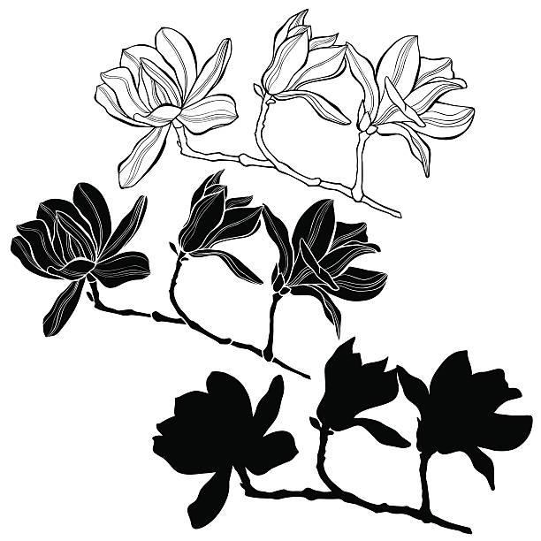magnolia branch clip art - photo #35