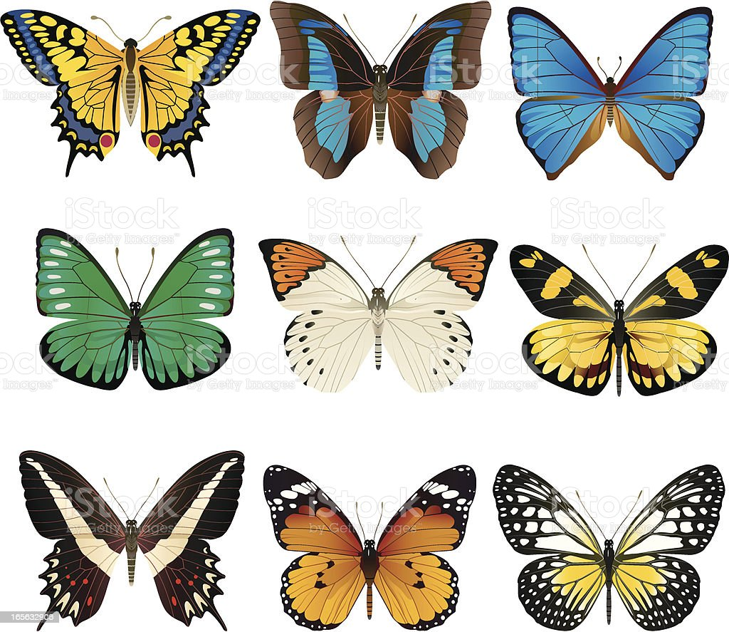 Set of nine butterflies on white background royalty-free stock vector art
