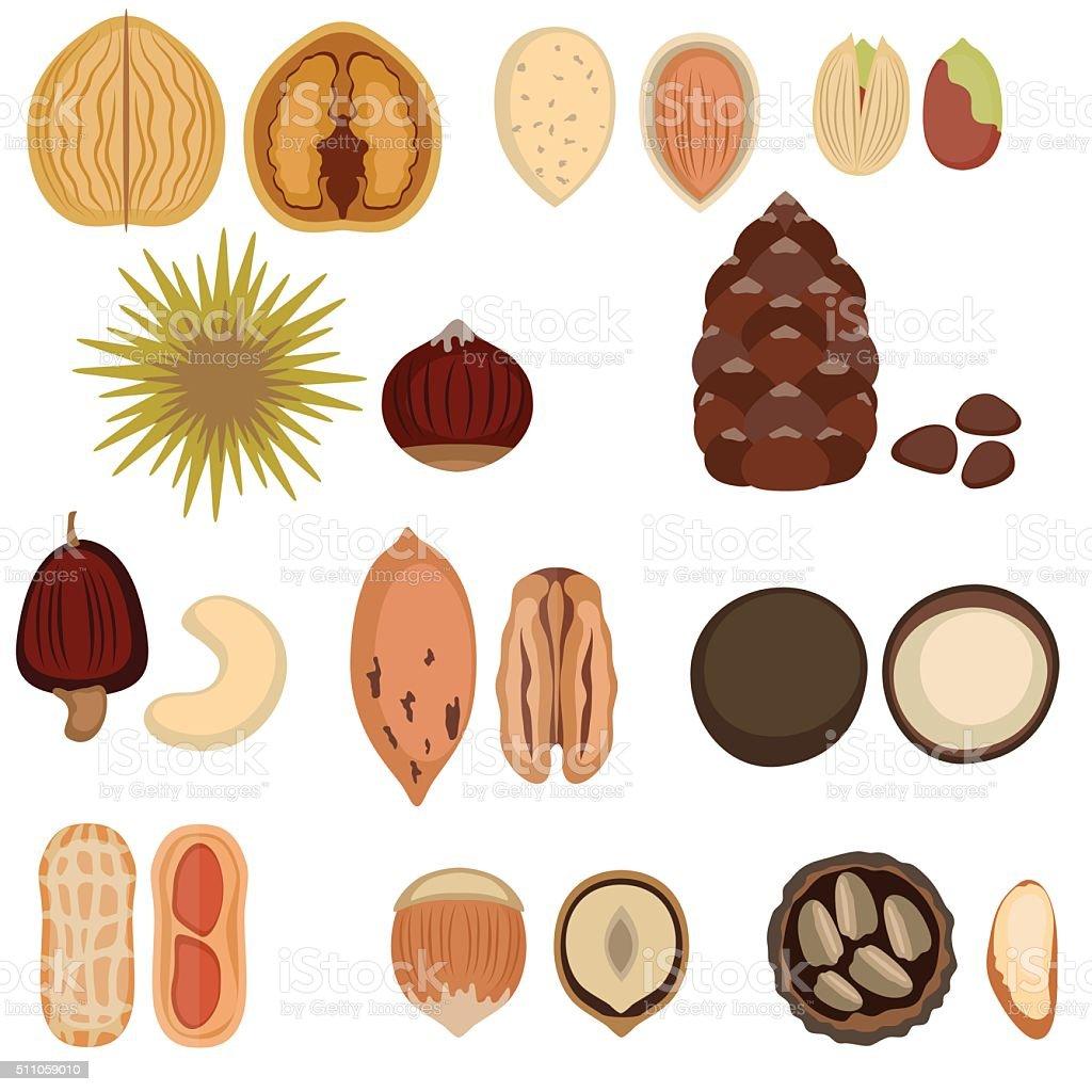 Set of nuts. vector art illustration