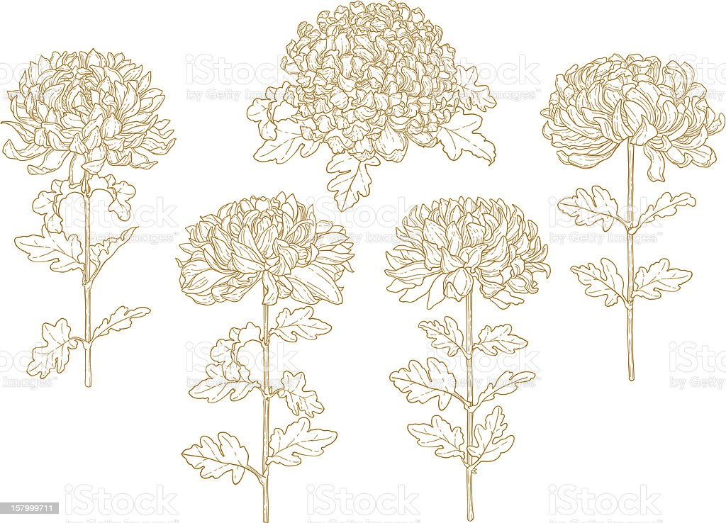 Set of one-colored outlined chrysanthemum royalty-free stock vector art