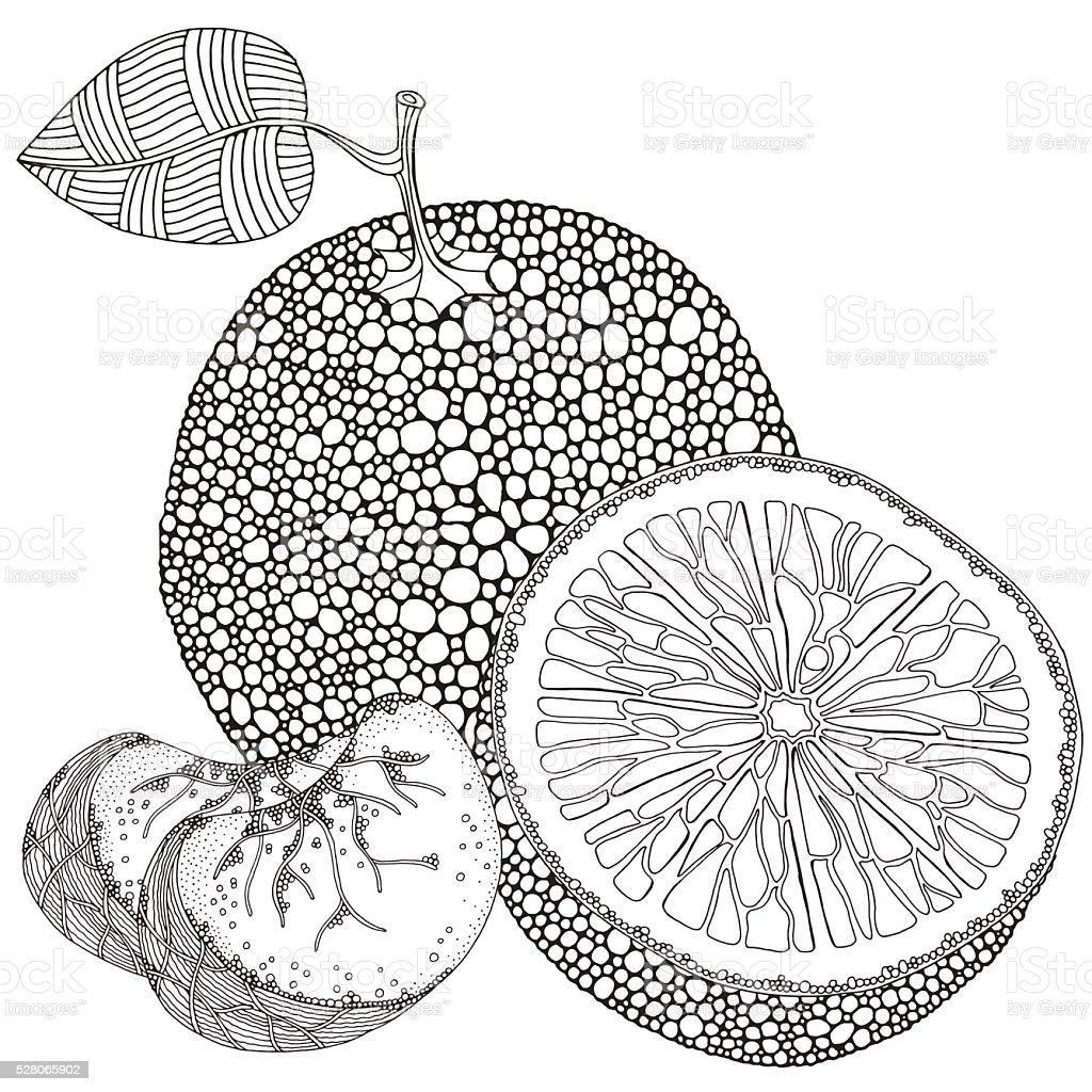 Set of oranges fruits on a white background. vector art illustration