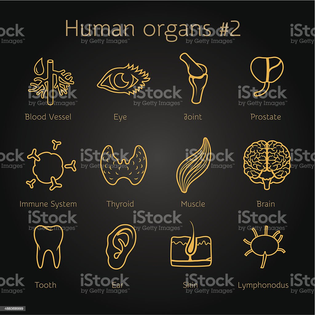 Set of otlines yellow icons with human organs royalty-free stock vector art