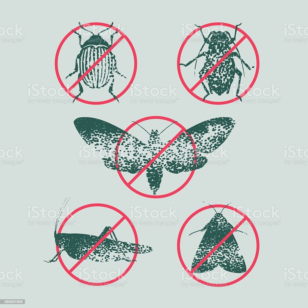 Set of pest insects in prohibition sign vector illustration vector art illustration