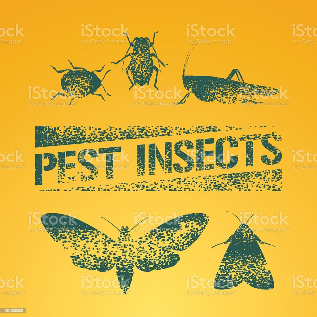 Set of pest insects vector illustration vector art illustration