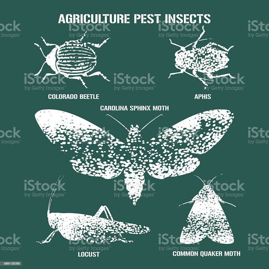 Set of pest insects vector  illustration with signs vector art illustration
