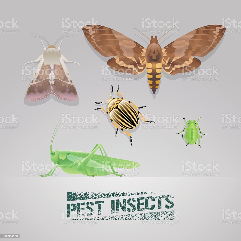 Set of pest insects vector realistic illustration vector art illustration