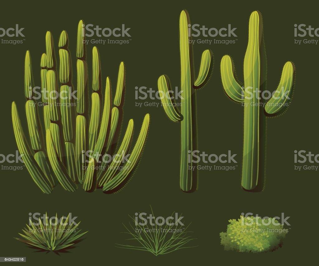 Set of plants growing in the desert of Arizona vector art illustration