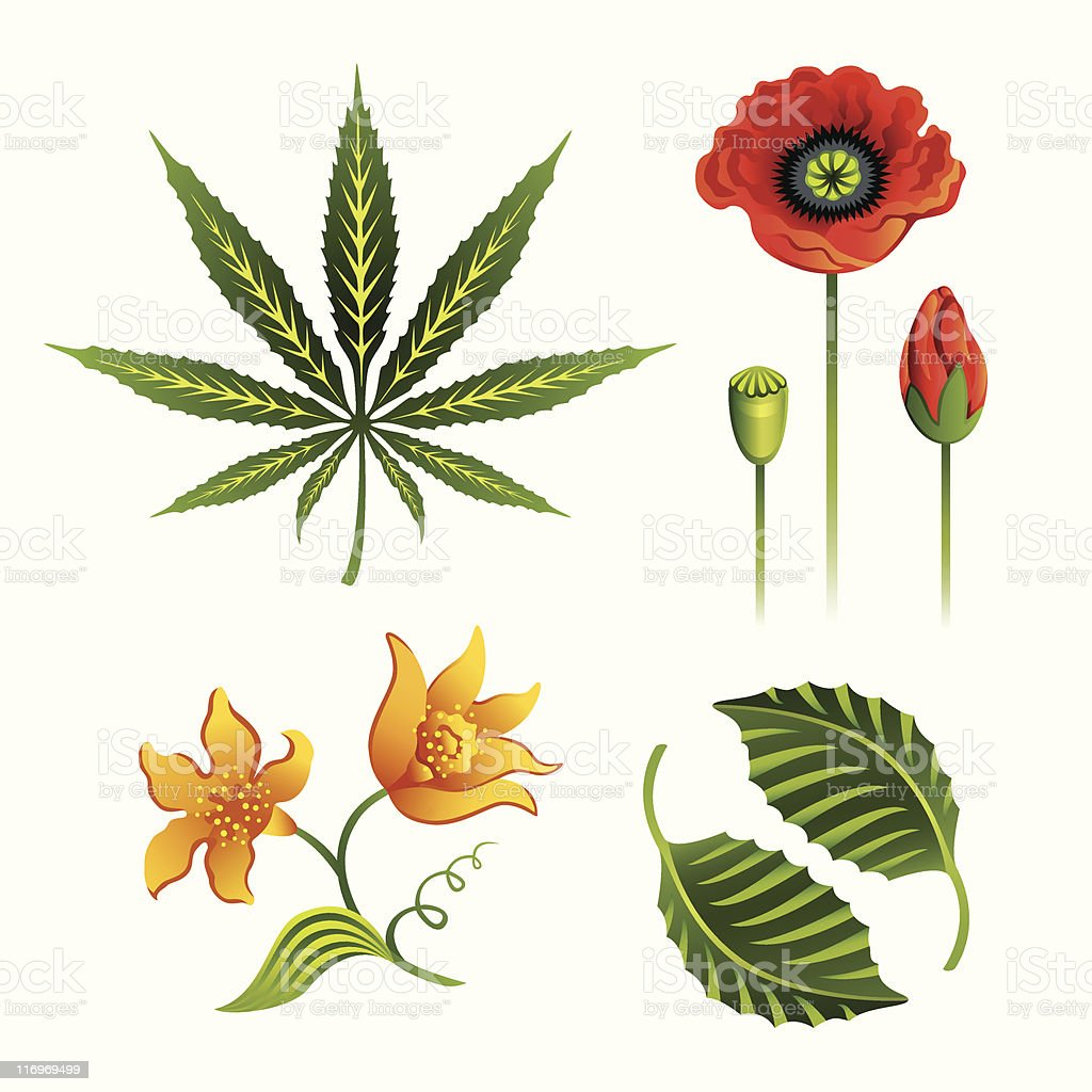 Set of plants royalty-free stock vector art