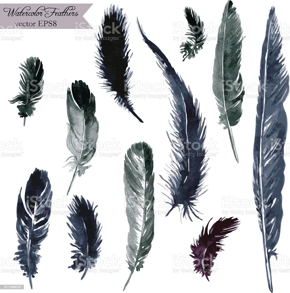 set of plumes vector art illustration