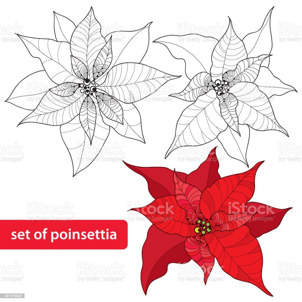 Set of Poinsettia or Christmas Star isolated on white background vector art illustration