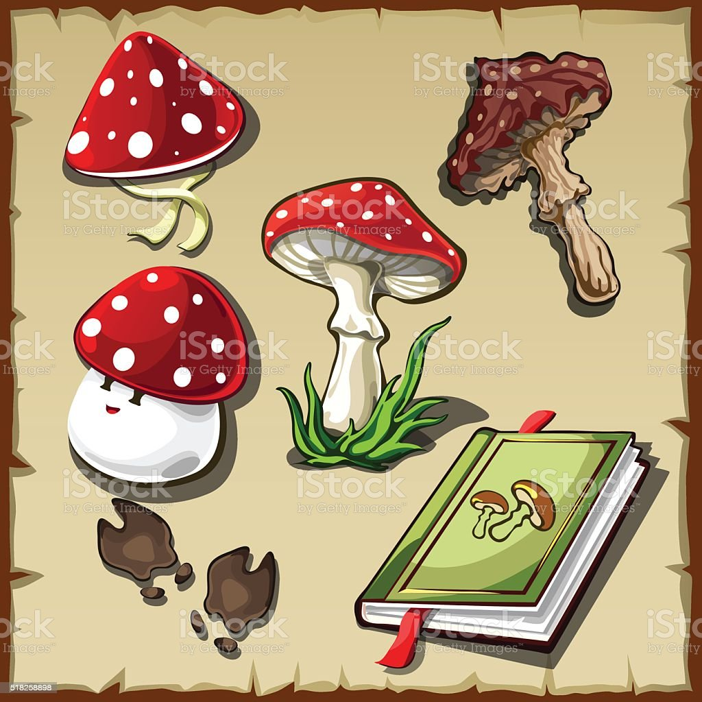 Set of poisonous mushrooms and cookbook vector art illustration