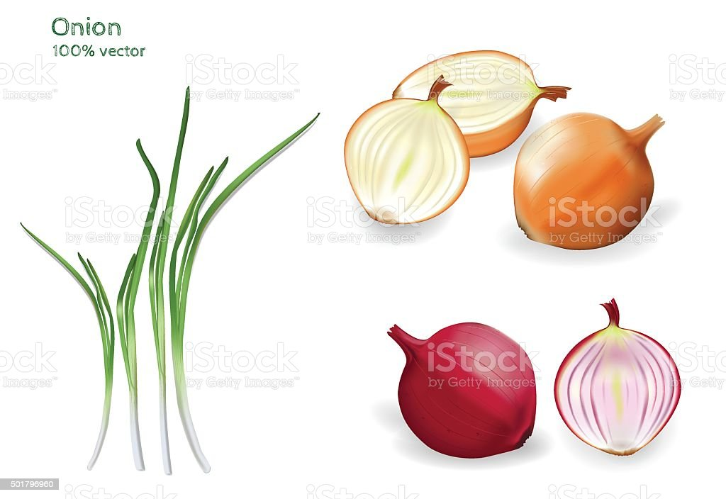 Set of red, yellow and green onion. vector art illustration