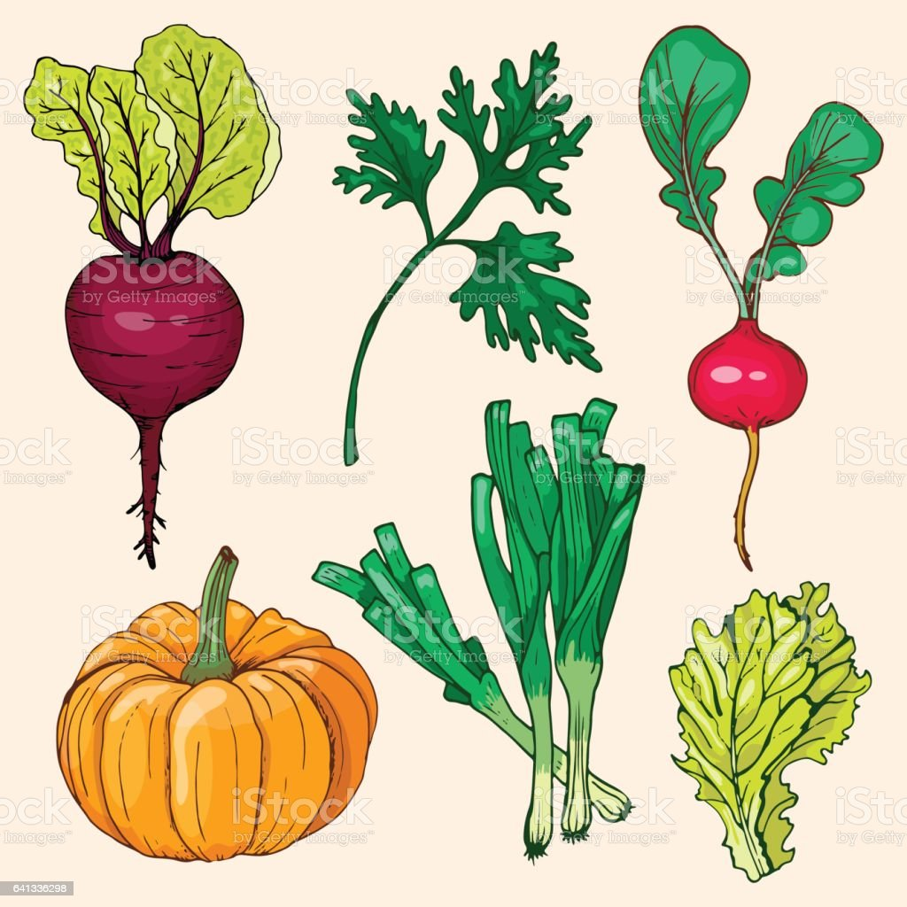 Set of ripe vegetables and herbs vector art illustration