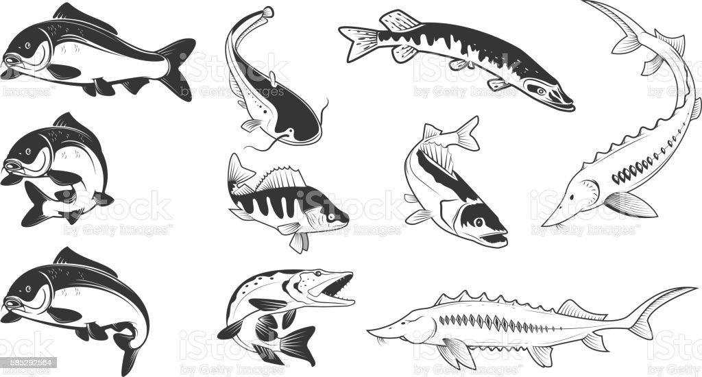 Set of river fish marks. River carp, vector art illustration