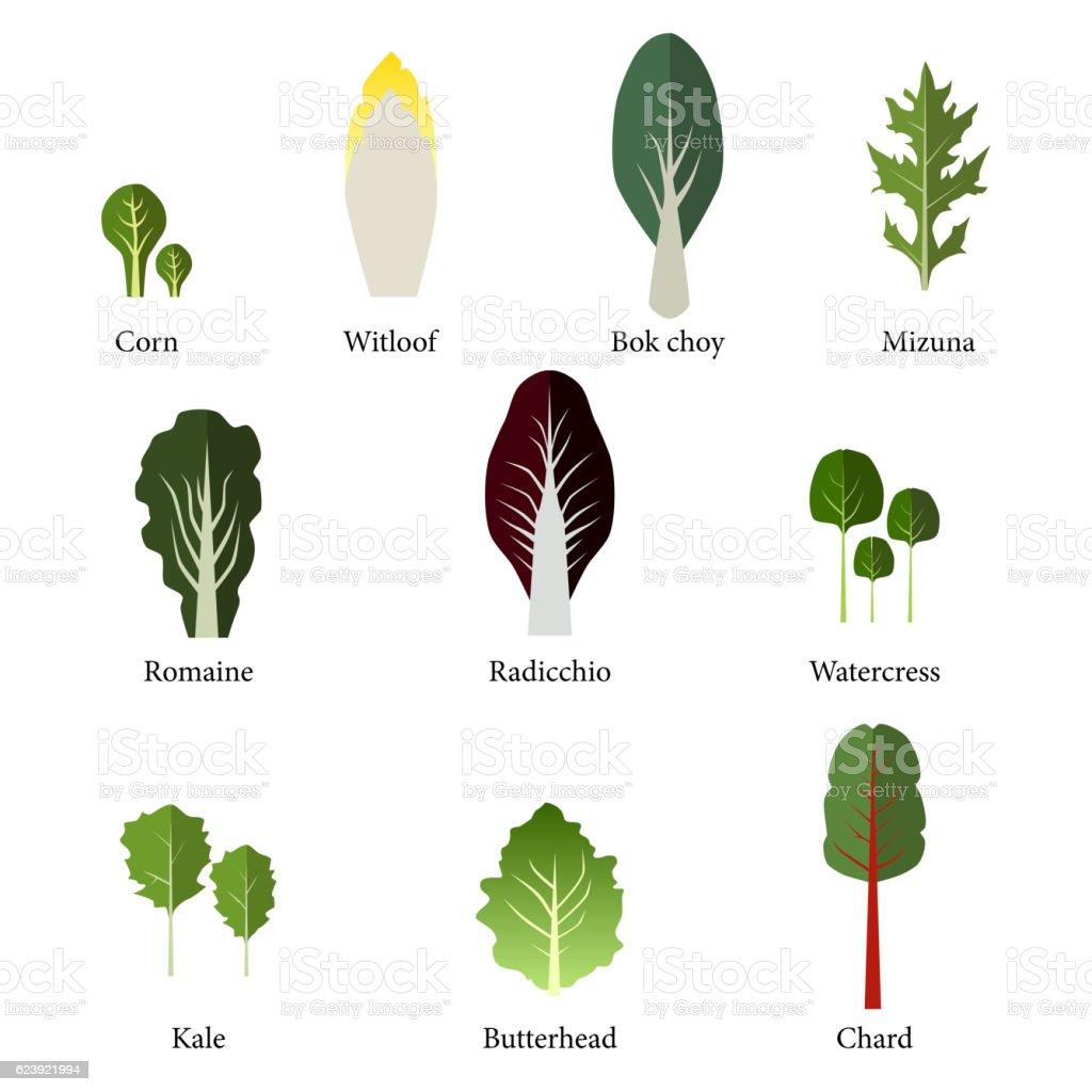 Set of salad bowl. Leafy vegetables green. Vector vector art illustration