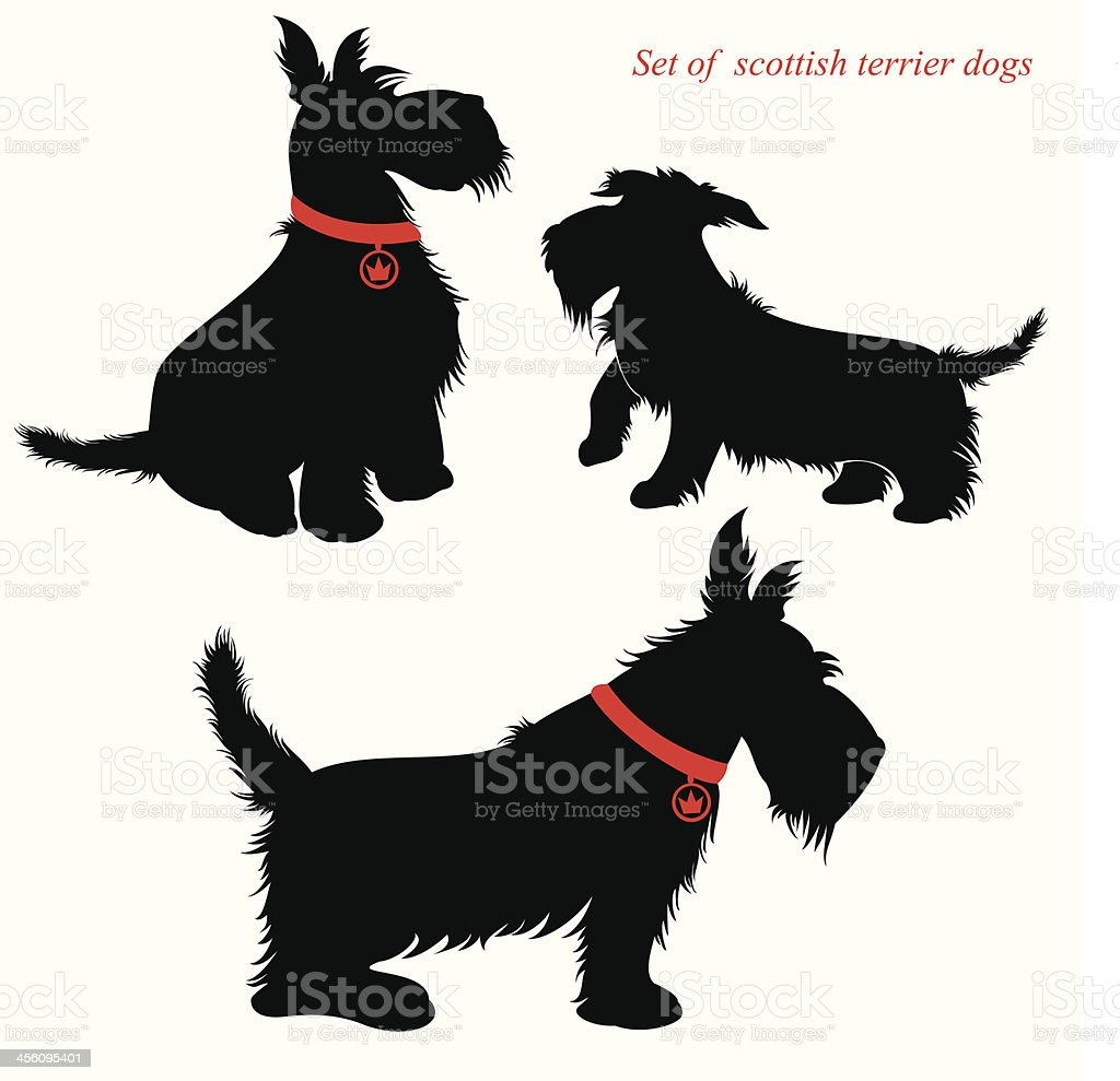 Рисунки всех собак терьеров