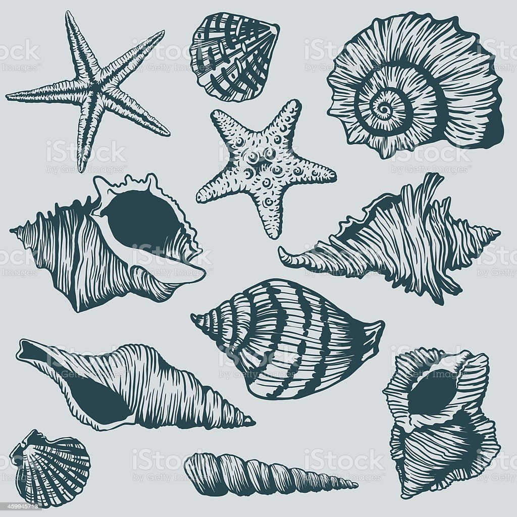 Set of Shells - Illustration royalty-free stock vector art