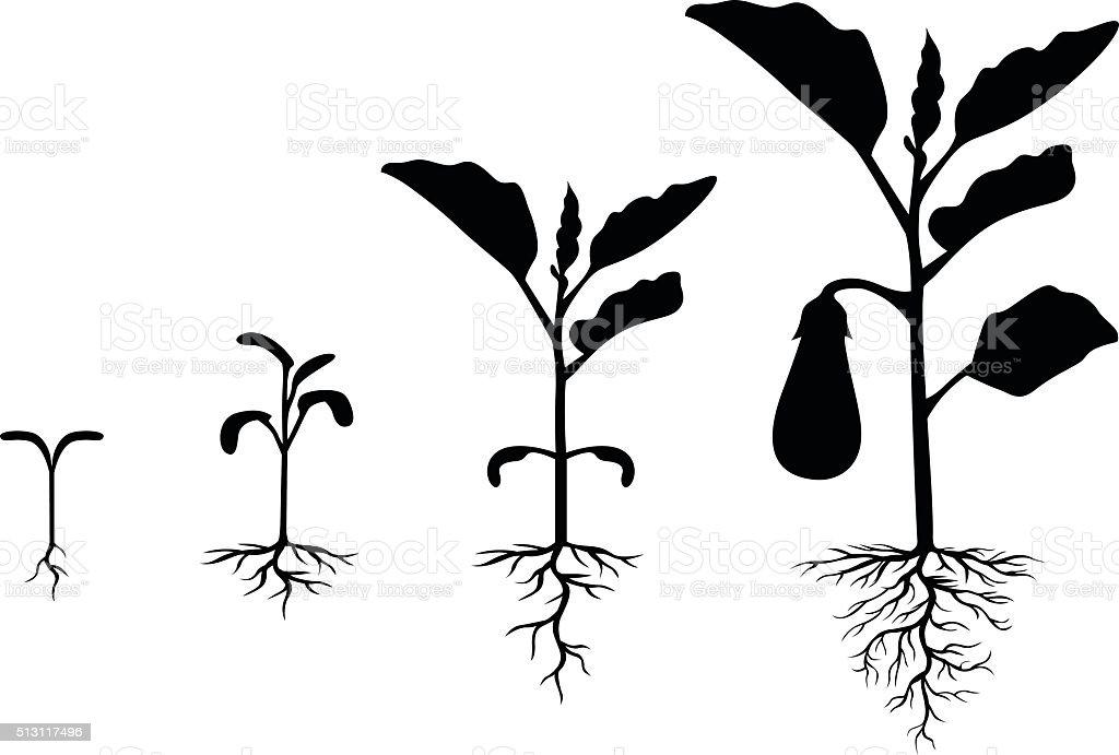 Set of silhouettes of eggplant plants vector art illustration